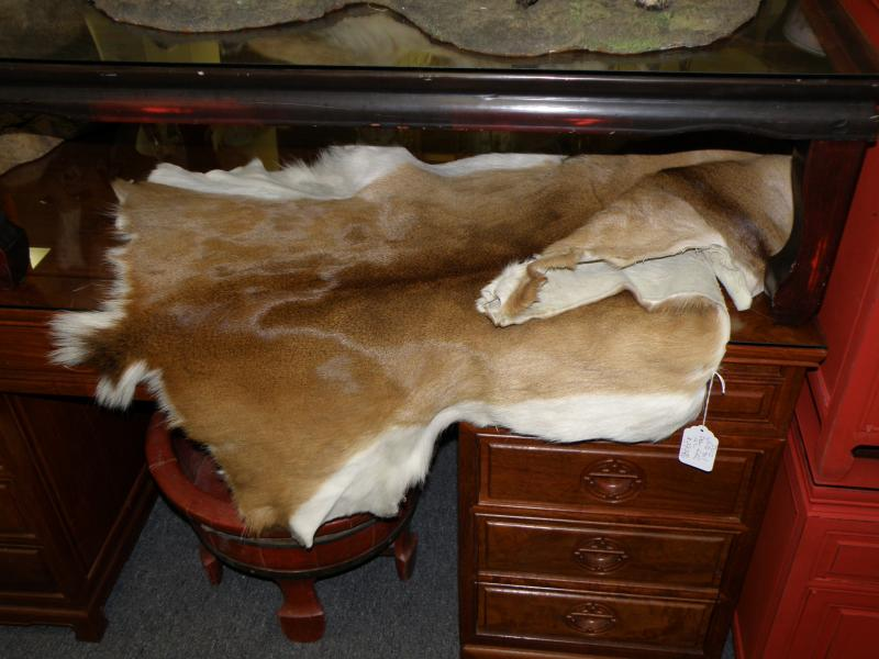 White Tail Deer Hide  USA